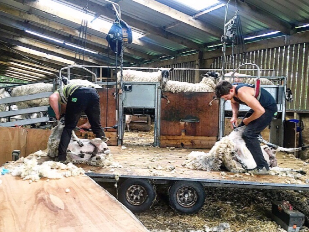 Shearing 101: What happens?